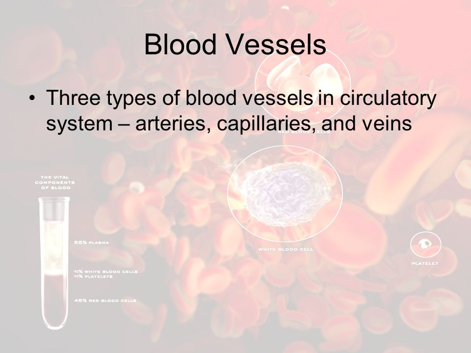 Blood Vessels Three types of blood vessels in circulatory system – arteries, capillaries, and veins