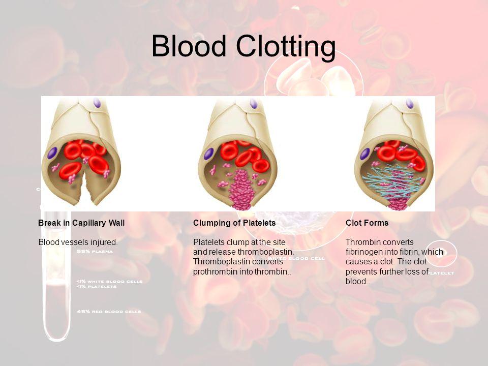 Blood Clotting Break in Capillary Wall Blood vessels injured.