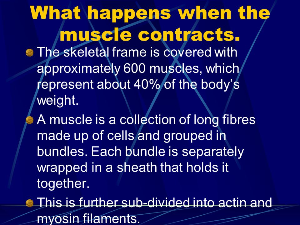 What happens when the muscle contracts.