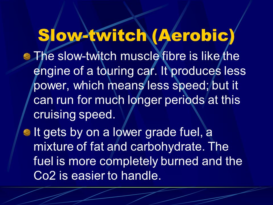Slow-twitch (Aerobic) The slow-twitch muscle fibre is like the engine of a touring car.