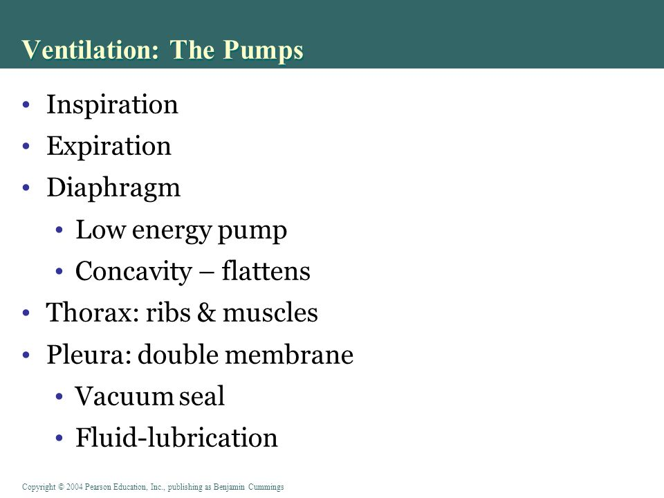 Copyright © 2004 Pearson Education, Inc., publishing as Benjamin Cummings Ventilation: The Pumps Inspiration Expiration Diaphragm Low energy pump Concavity – flattens Thorax: ribs & muscles Pleura: double membrane Vacuum seal Fluid-lubrication