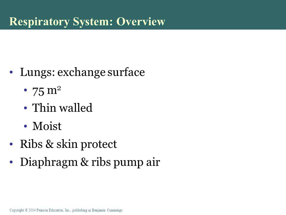 Copyright © 2004 Pearson Education, Inc., publishing as Benjamin Cummings Capillaries in Alveolar Wall