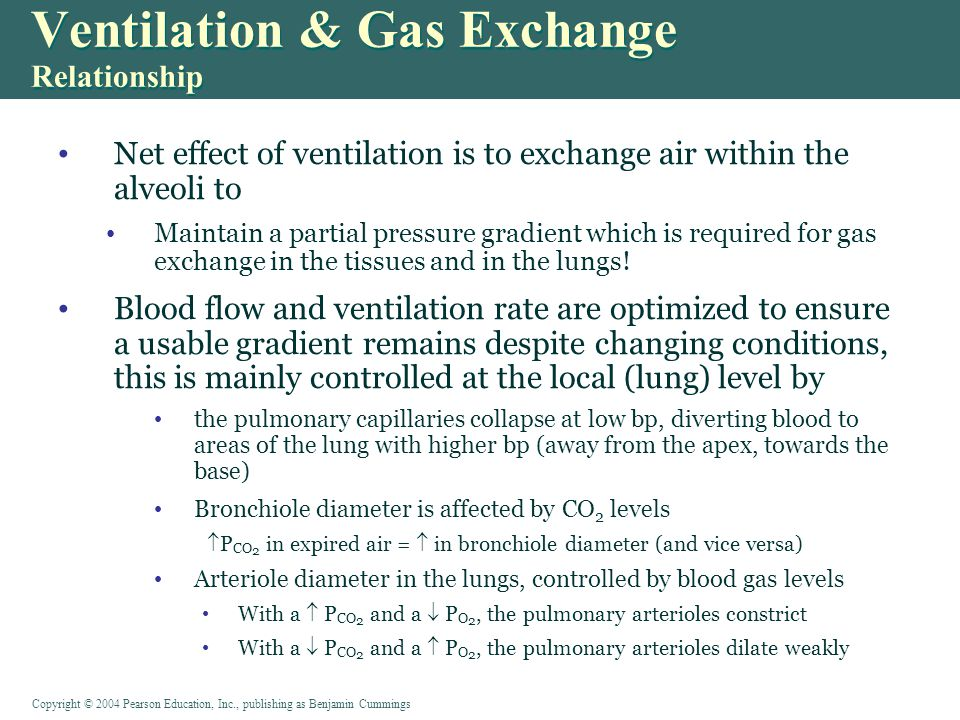 Ventilation & Gas Exchange Relationship Net effect of ventilation is to exchange air within the alveoli to Maintain a partial pressure gradient which is required for gas exchange in the tissues and in the lungs.