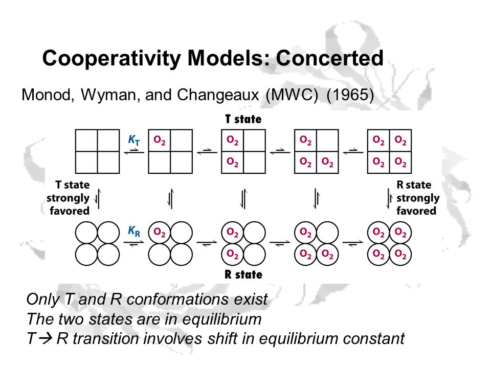 Cooperativity Models: Concerted Monod, Wyman, and Changeaux (MWC) (1965) Only T and R conformations exist The two states are in equilibrium T  R transition involves shift in equilibrium constant