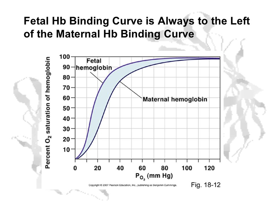Fetal Hb Binding Curve is Always to the Left of the Maternal Hb Binding Curve