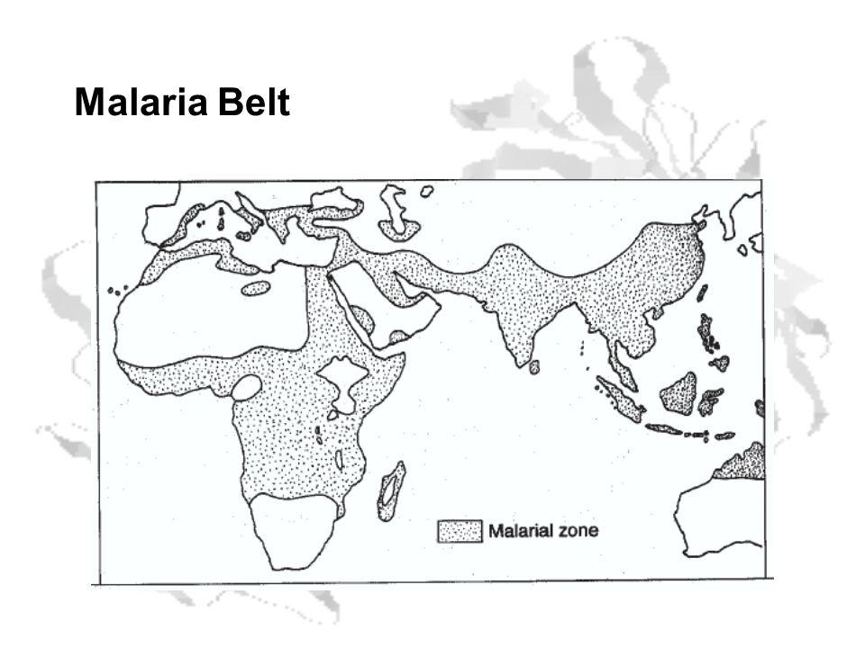 Malaria Belt