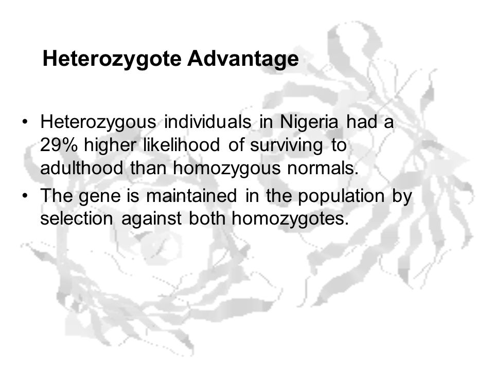 Heterozygote Advantage Heterozygous individuals in Nigeria had a 29% higher likelihood of surviving to adulthood than homozygous normals.