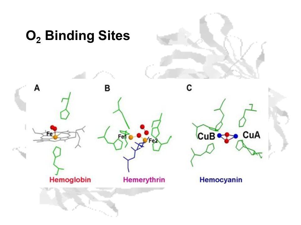 O 2 Binding Sites