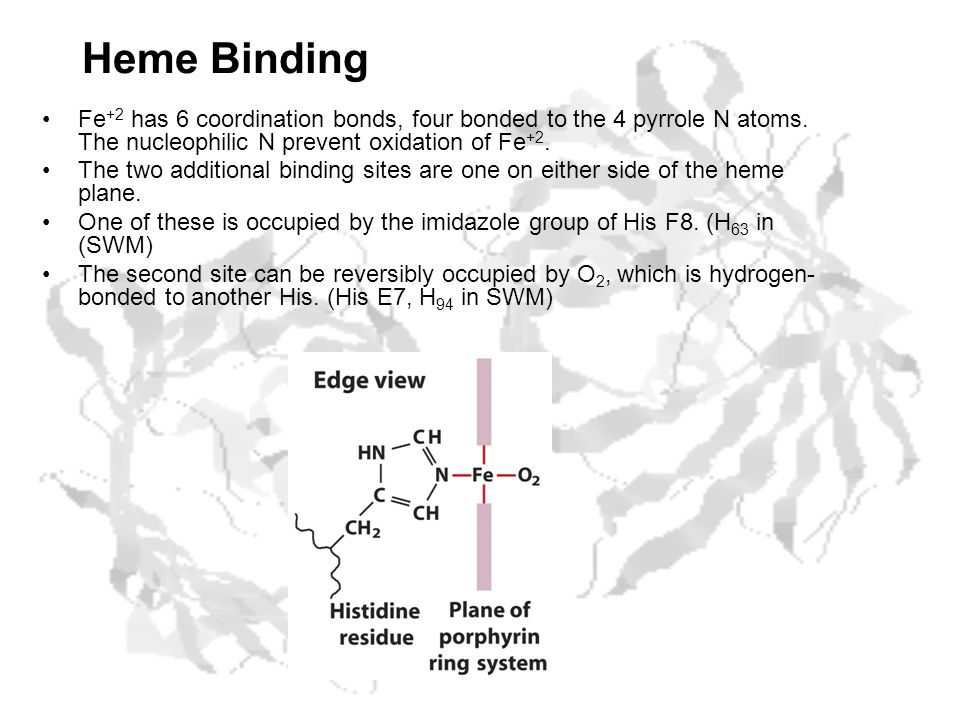 Heme Binding Fe +2 has 6 coordination bonds, four bonded to the 4 pyrrole N atoms.