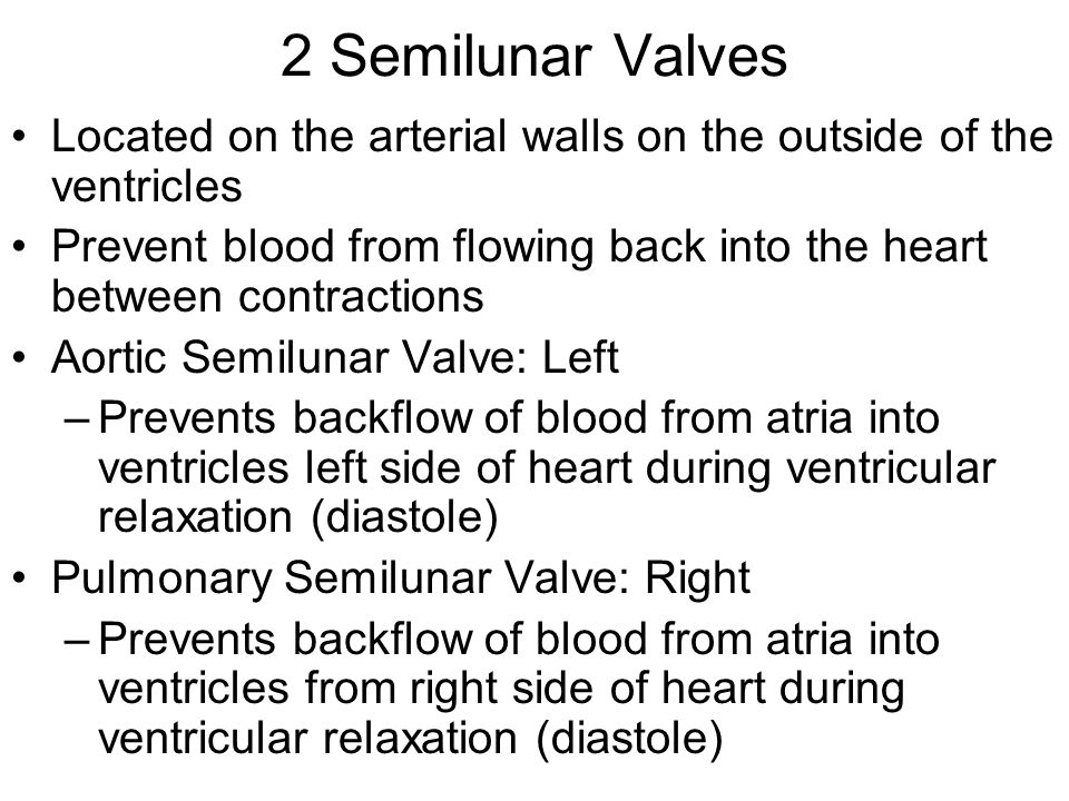 2 Semilunar Valves Located on the arterial walls on the outside of the ventricles Prevent blood from flowing back into the heart between contractions Aortic Semilunar Valve: Left –Prevents backflow of blood from atria into ventricles left side of heart during ventricular relaxation (diastole) Pulmonary Semilunar Valve: Right –Prevents backflow of blood from atria into ventricles from right side of heart during ventricular relaxation (diastole)