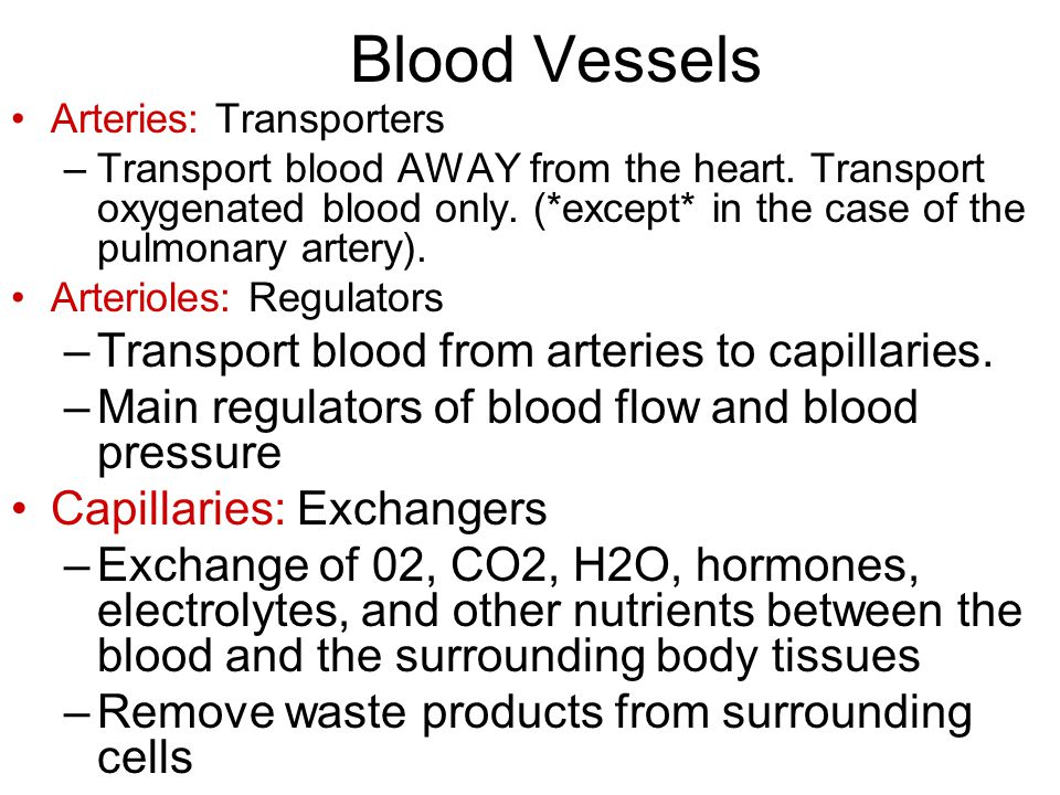 Blood Vessels Arteries: Transporters –Transport blood AWAY from the heart.
