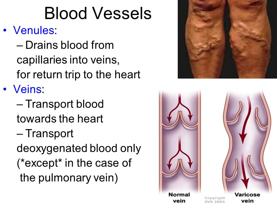Blood Vessels Venules: –Drains blood from capillaries into veins, for return trip to the heart Veins: –Transport blood towards the heart –Transport deoxygenated blood only (*except* in the case of the pulmonary vein)