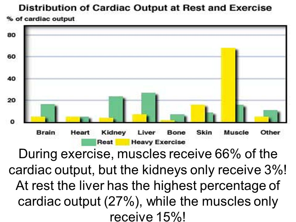 During exercise, muscles receive 66% of the cardiac output, but the kidneys only receive 3%.