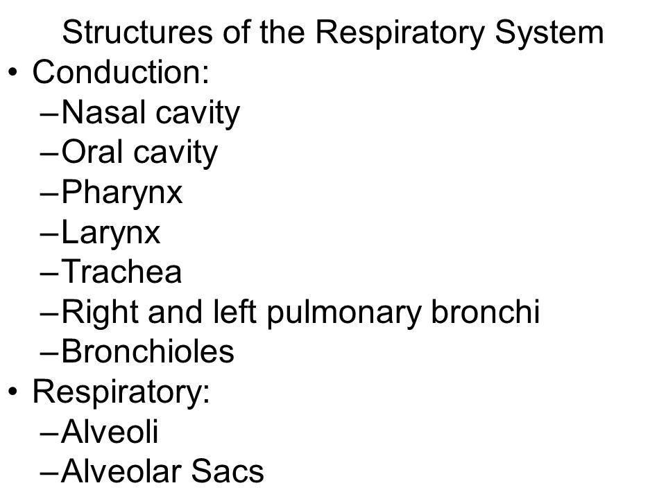 Structures of the Respiratory System Conduction: –Nasal cavity –Oral cavity –Pharynx –Larynx –Trachea –Right and left pulmonary bronchi –Bronchioles Respiratory: –Alveoli –Alveolar Sacs
