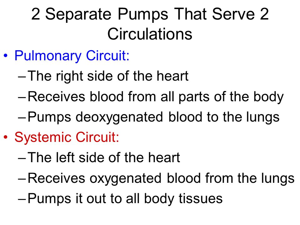 2 Separate Pumps That Serve 2 Circulations Pulmonary Circuit: –The right side of the heart –Receives blood from all parts of the body –Pumps deoxygenated blood to the lungs Systemic Circuit: –The left side of the heart –Receives oxygenated blood from the lungs –Pumps it out to all body tissues