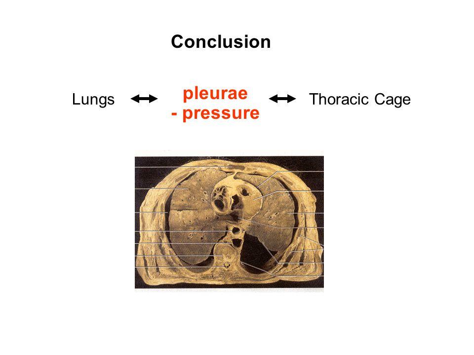 Conclusion LungsThoracic Cage pleurae - pressure