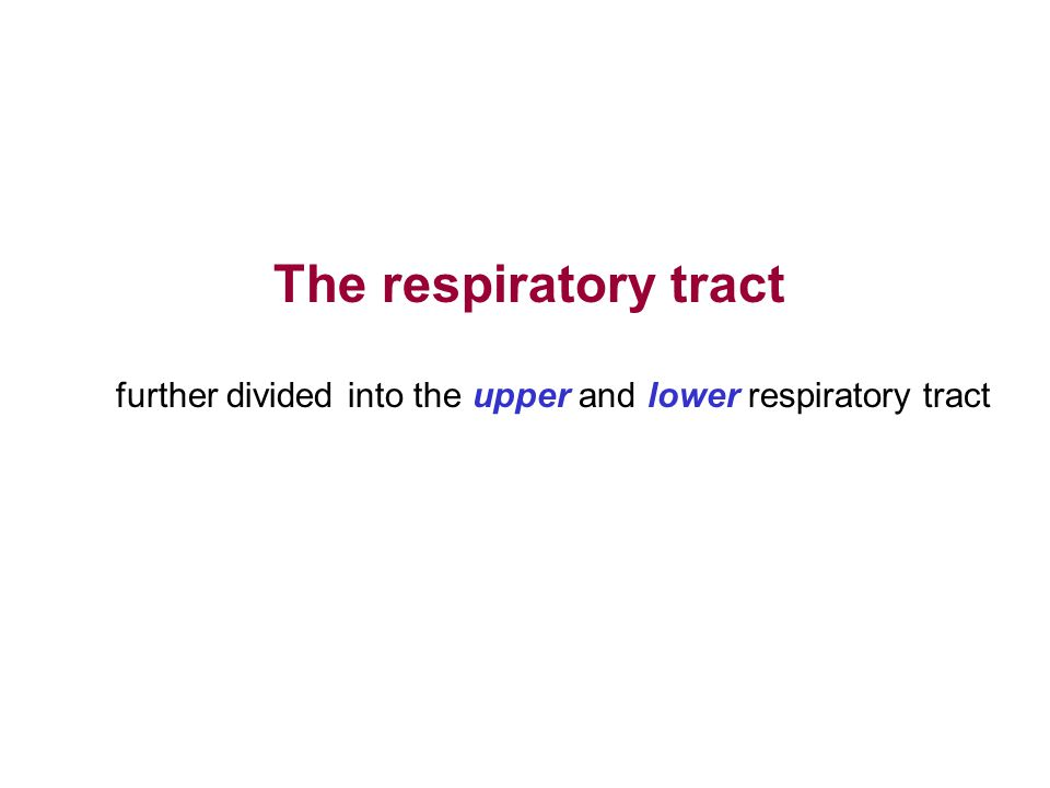 The respiratory tract further divided into the upper and lower respiratory tract