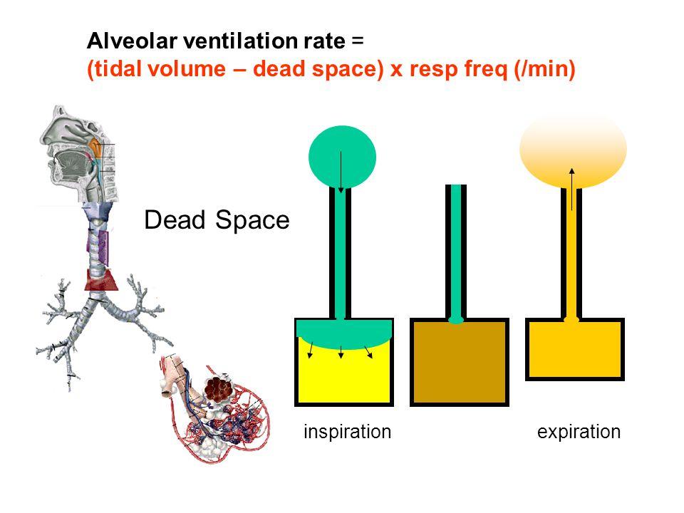 Dead Space inspirationexpiration Alveolar ventilation rate = (tidal volume – dead space) x resp freq (/min)