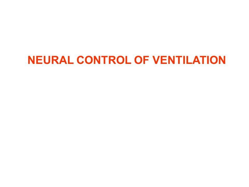 NEURAL CONTROL OF VENTILATION
