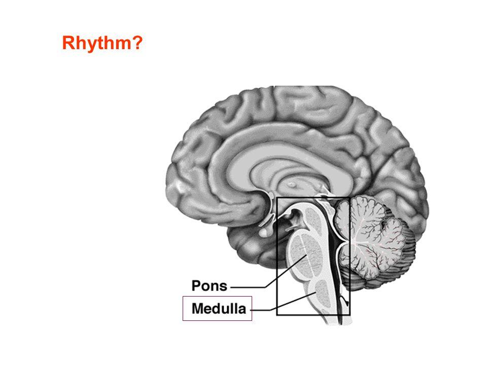 Rhythm?