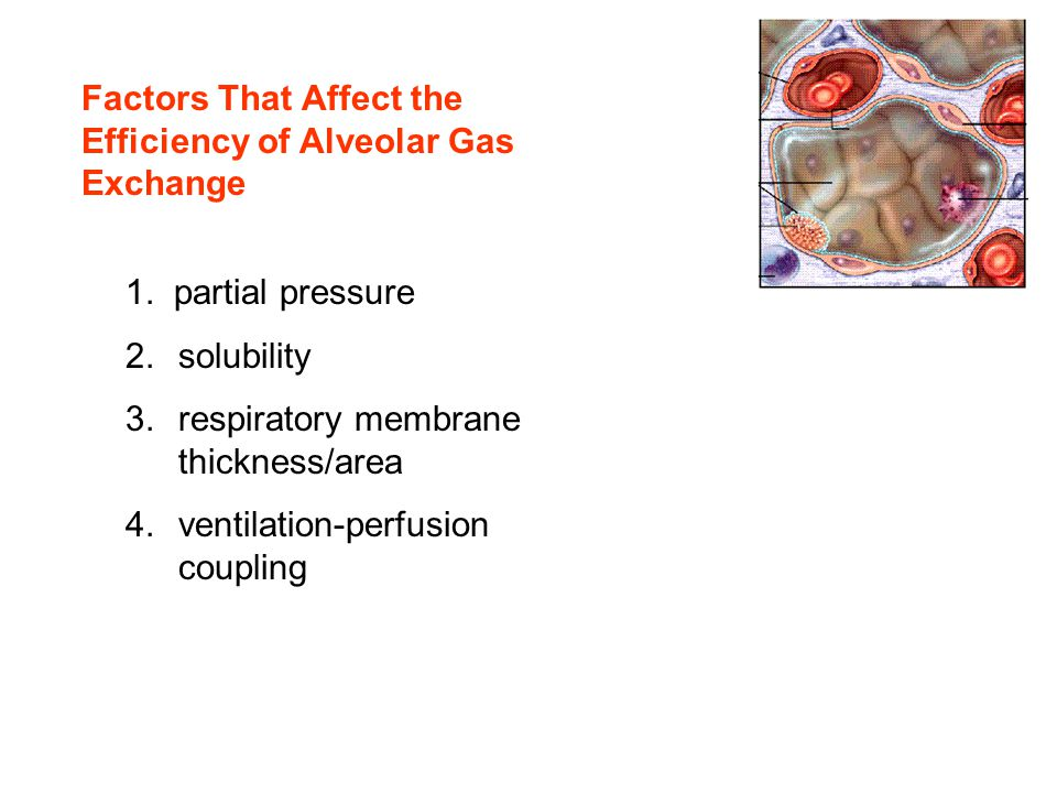Factors That Affect the Efficiency of Alveolar Gas Exchange 1. partial pressure 2.solubility 3.respiratory membrane thickness/area 4.ventilation-perfu