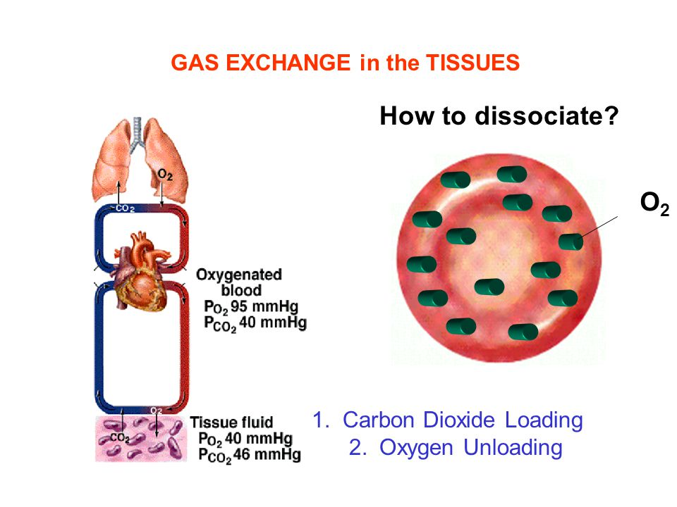 GAS EXCHANGE in the TISSUES 1. Carbon Dioxide Loading 2.Oxygen Unloading How to dissociate? O2O2