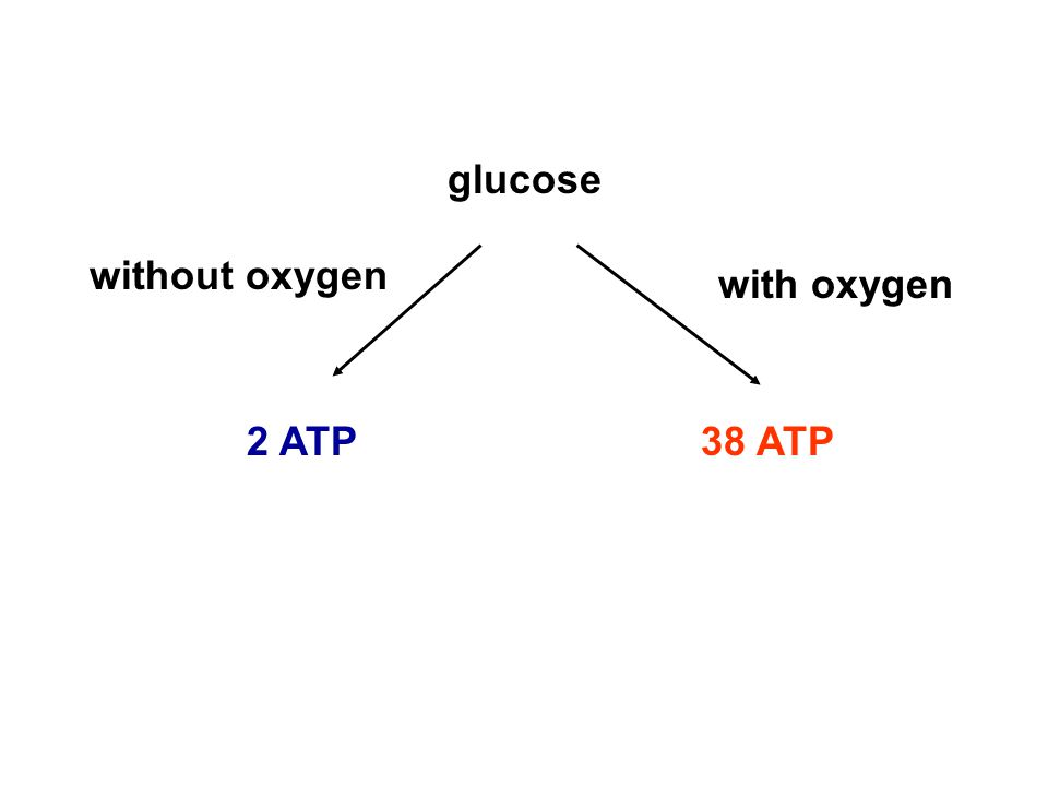 with oxygen without oxygen glucose 2 ATP38 ATP