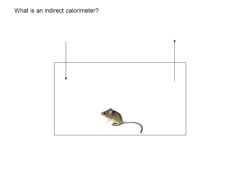 What is an indirect calorimeter?