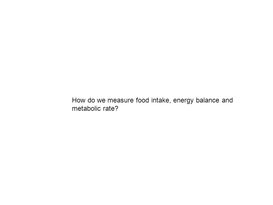 How do we measure food intake, energy balance and metabolic rate