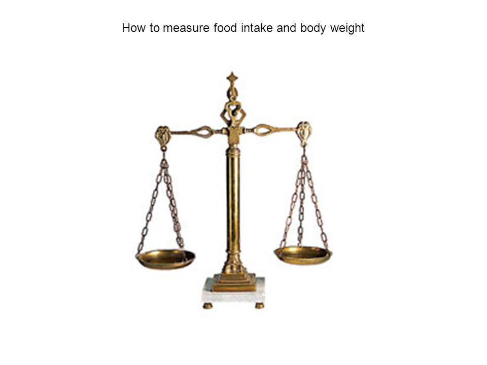 How to measure food intake and body weight