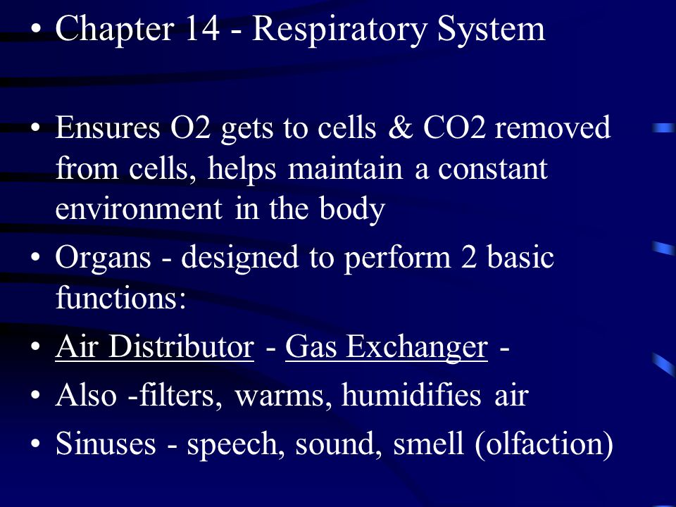 Chapter 14 - Respiratory System Ensures O2 gets to cells & CO2 removed from cells, helps maintain a constant environment in the body Organs - designed