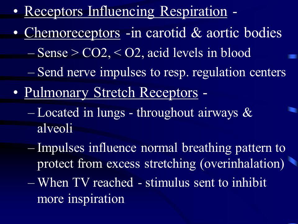 Receptors Influencing Respiration - Chemoreceptors -in carotid & aortic bodies –Sense > CO2, < O2, acid levels in blood –Send nerve impulses to resp.
