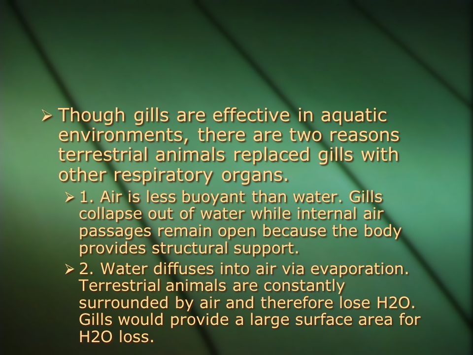  Though gills are effective in aquatic environments, there are two reasons terrestrial animals replaced gills with other respiratory organs.  1. Air
