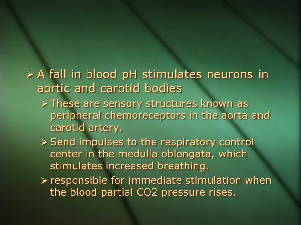  A fall in blood pH stimulates neurons in aortic and carotid bodies  These are sensory structures known as peripheral chemoreceptors in the aorta an