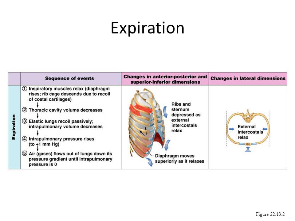 Expiration Figure 22.13.2