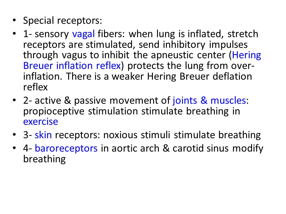 Special receptors: 1- sensory vagal fibers: when lung is inflated, stretch receptors are stimulated, send inhibitory impulses through vagus to inhibit the apneustic center (Hering Breuer inflation reflex) protects the lung from over- inflation.