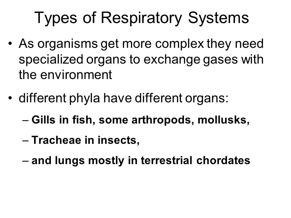 Types of Respiratory Systems As organisms get more complex they need specialized organs to exchange gases with the environment different phyla have different organs: –Gills in fish, some arthropods, mollusks, –Tracheae in insects, –and lungs mostly in terrestrial chordates