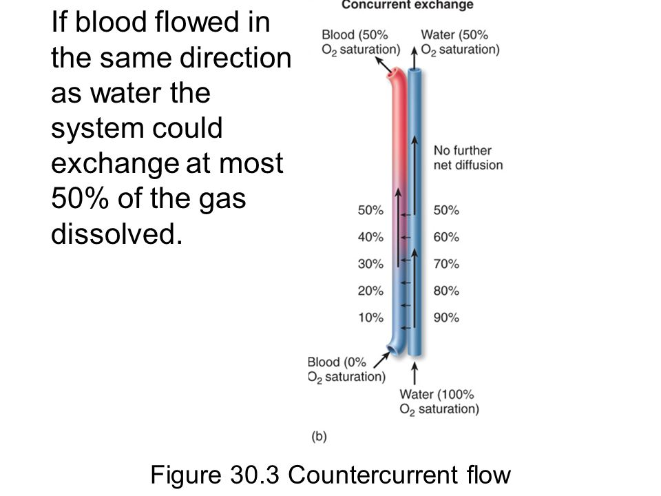Figure 30.3 Countercurrent flow If blood flowed in the same direction as water the system could exchange at most 50% of the gas dissolved.