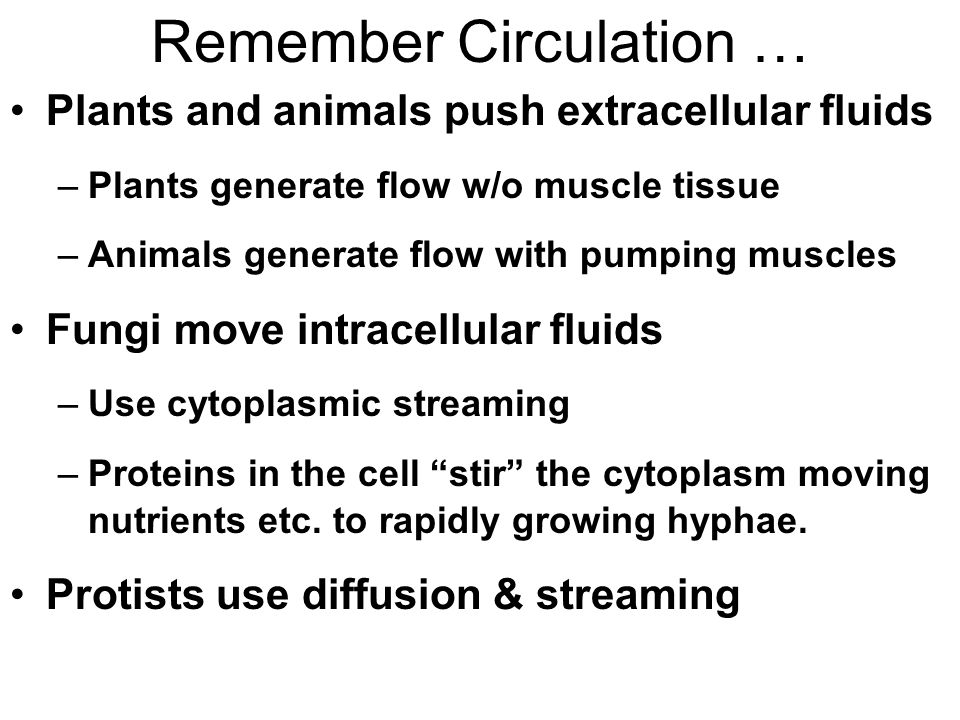 Remember Circulation … Plants and animals push extracellular fluids –Plants generate flow w/o muscle tissue –Animals generate flow with pumping muscles Fungi move intracellular fluids –Use cytoplasmic streaming –Proteins in the cell stir the cytoplasm moving nutrients etc.
