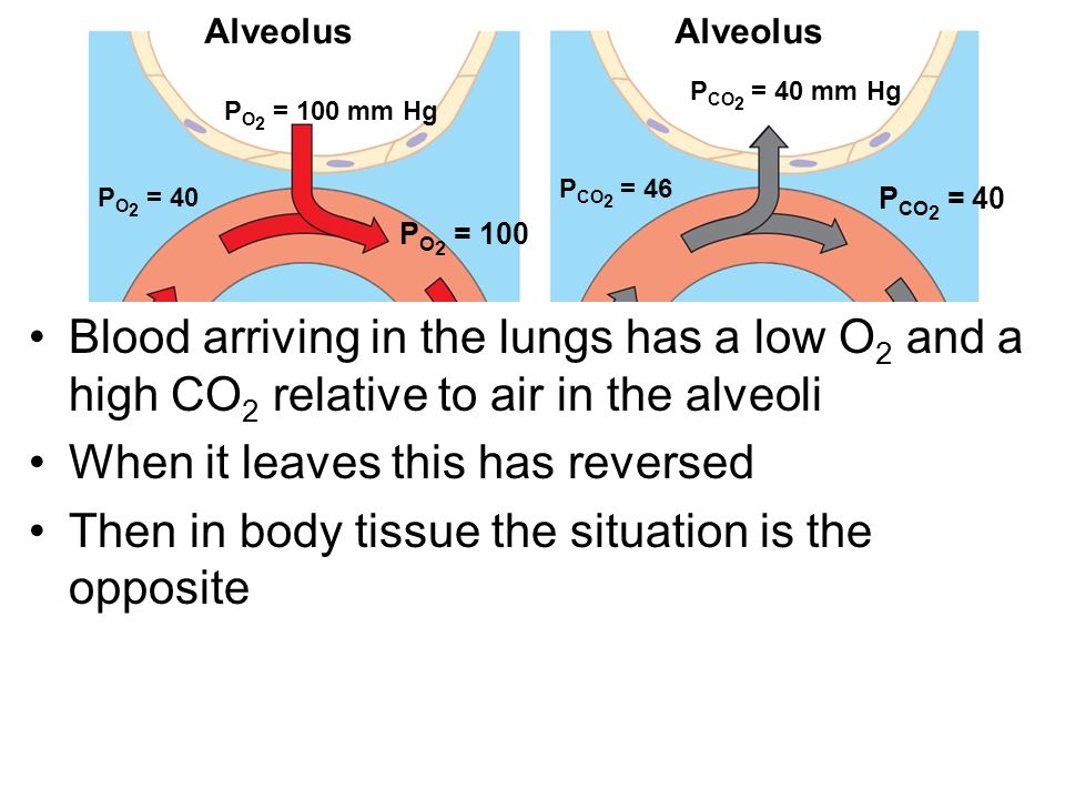 Alveolus P O 2 = 100 mm Hg P O 2 = 40 P O 2 = 100 P O 2 = 40 Circulatory system Body tissue P O 2 ≤ 40 mm HgP CO 2 ≥ 46 mm Hg Body tissue P CO 2 = 46 P CO 2 = 40 P CO 2 = 46 Circulatory system P CO 2 = 40 mm Hg (b) Carbon dioxide(a) Oxygen Blood arriving in the lungs has a low O 2 and a high CO 2 relative to air in the alveoli When it leaves this has reversed Then in body tissue the situation is the opposite Alveolus