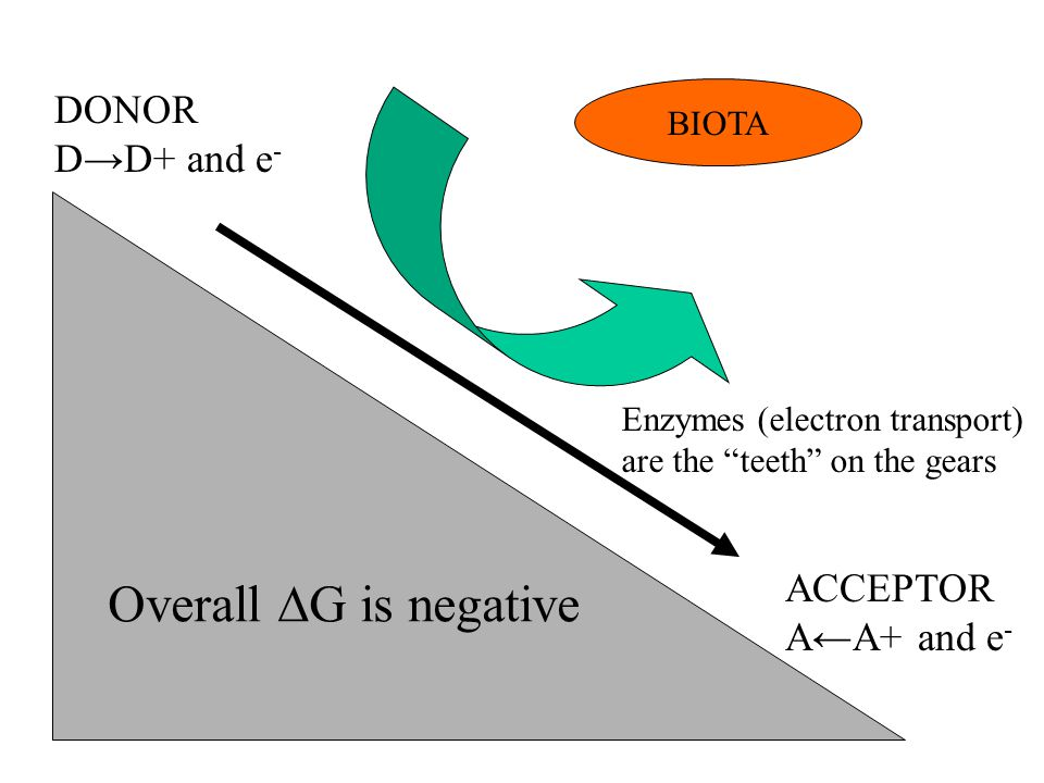 "Overall ∆G is negative DONOR D→D+ and e - ACCEPTOR A←A+ and e - BIOTA Enzymes (electron transport) are the ""teeth"" on the gears"