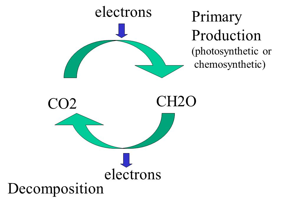 electrons Primary Production (photosynthetic or chemosynthetic) Decomposition CH2O CO2