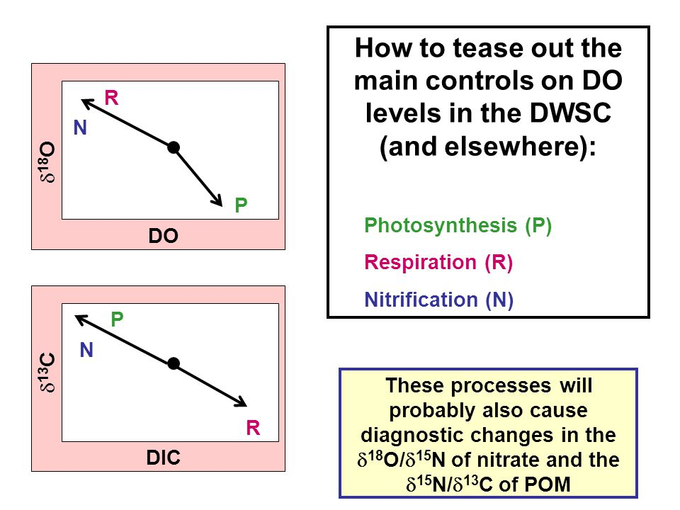 DO  18 O  13 C DIC How to tease out the main controls on DO levels in the DWSC (and elsewhere): Photosynthesis (P) Respiration (R) Nitrification (N)