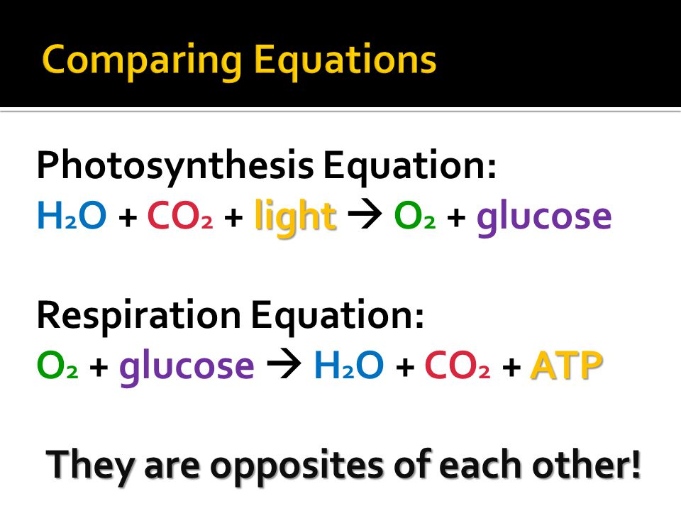 Photosynthesis Equation: light H 2 O + CO 2 + light  O 2 + glucose Respiration Equation: ATP O 2 + glucose  H 2 O + CO 2 + ATP They are opposites of each other!