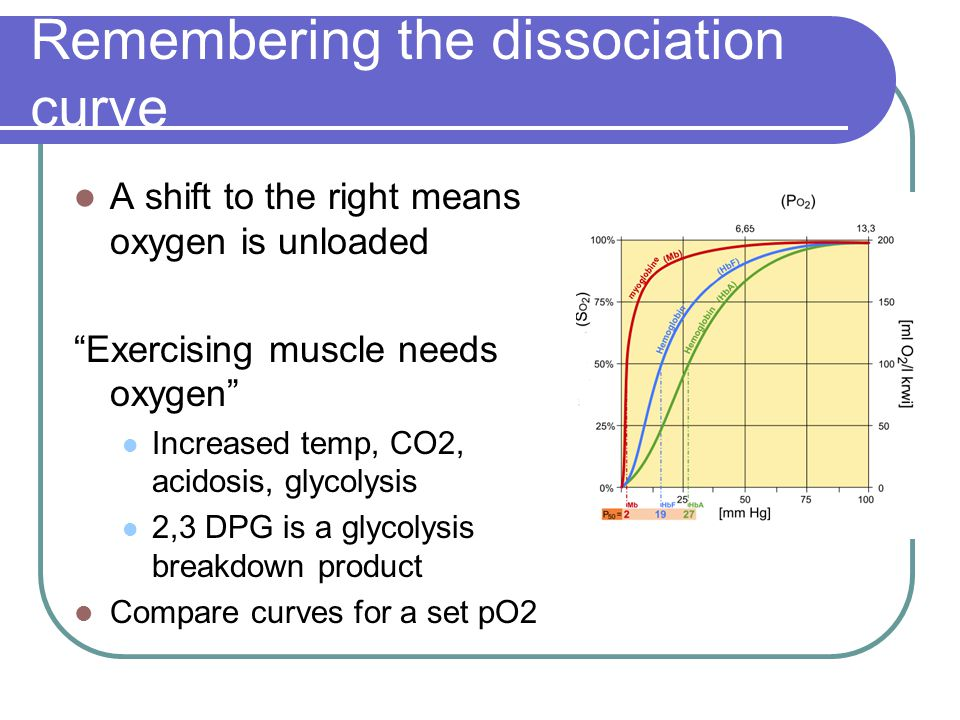 "Remembering the dissociation curve A shift to the right means oxygen is unloaded ""Exercising muscle needs oxygen"" Increased temp, CO2, acidosis, glyco"