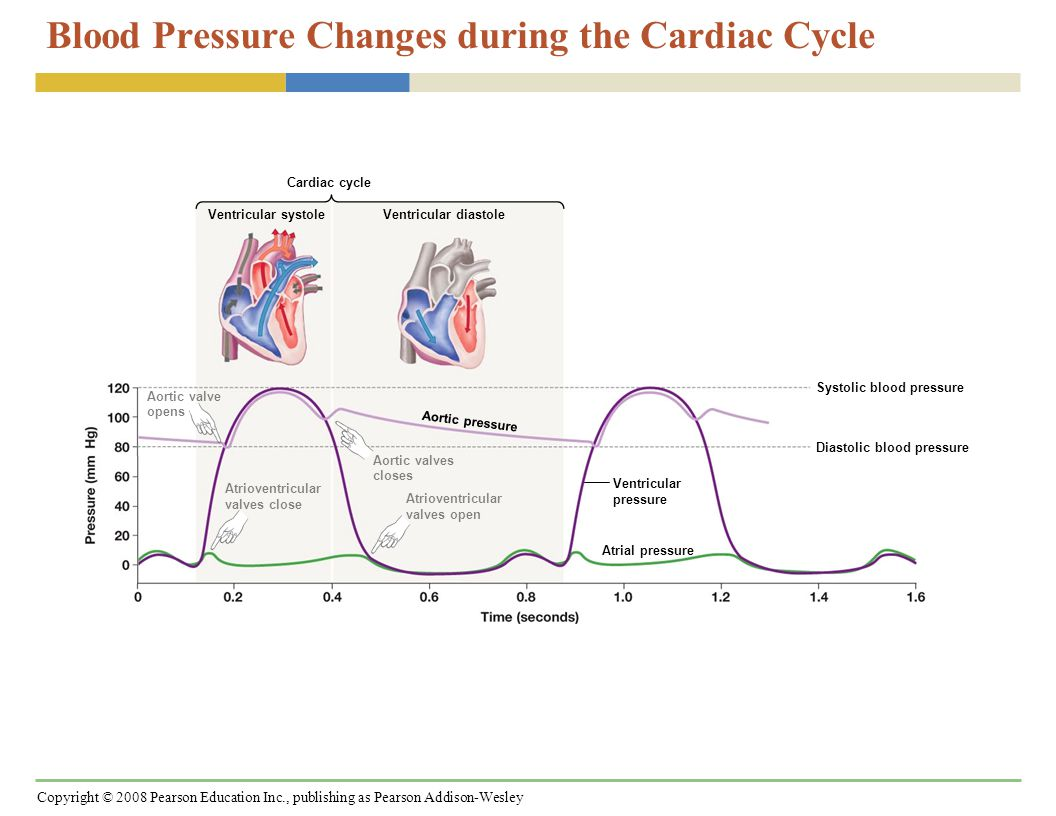 Copyright © 2008 Pearson Education Inc., publishing as Pearson Addison-Wesley EKGs Record Electrical Events Associated with Cardiac Muscle Contraction SA node activates atria AV node delay Electrical activity in atria Electrical activity in ventricles Ventricles recover