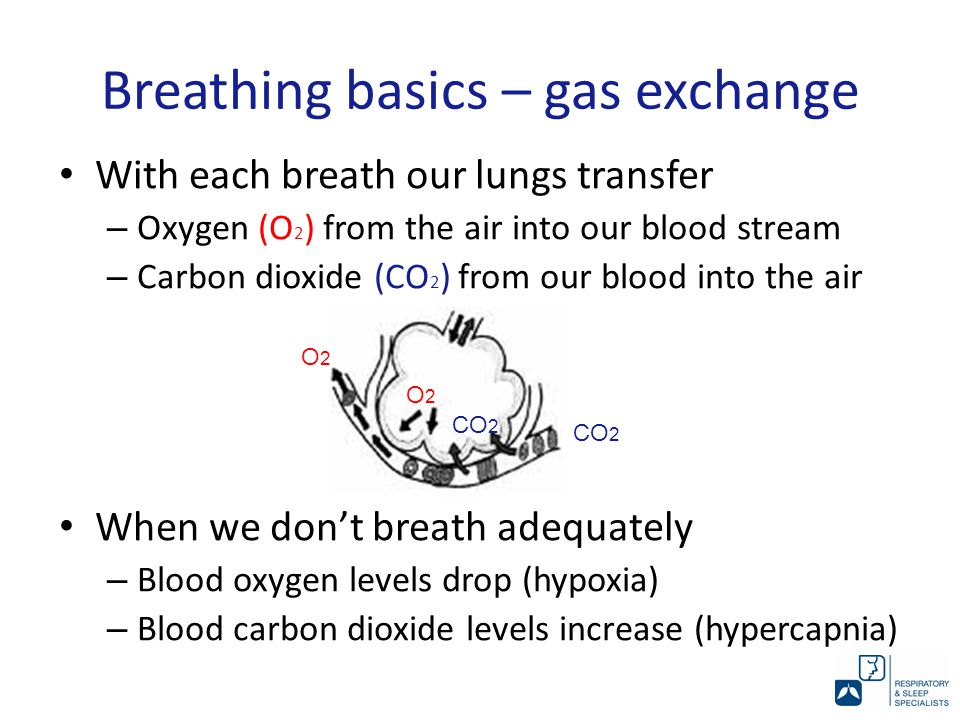 Breathing basics – gas exchange With each breath our lungs transfer – Oxygen (O 2 ) from the air into our blood stream – Carbon dioxide (CO 2 ) from our blood into the air When we don't breath adequately – Blood oxygen levels drop (hypoxia) – Blood carbon dioxide levels increase (hypercapnia) CO 2 O2O2 O2O2