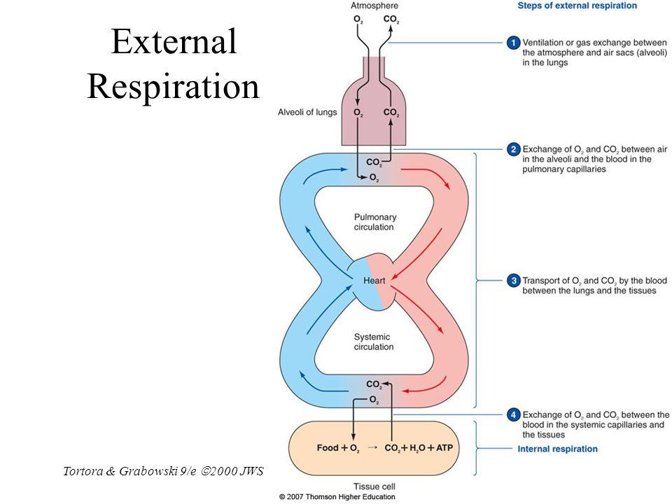 Tortora & Grabowski 9/e  2000 JWS 23-14 External Respiration