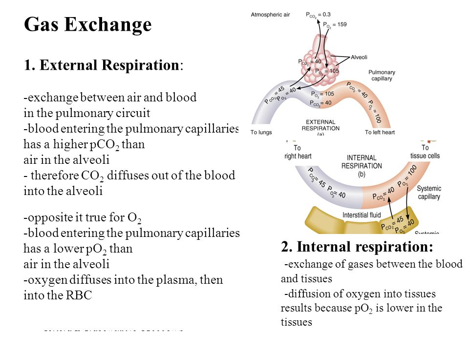 Tortora & Grabowski 9/e  2000 JWS 23-39 Gas Exchange 1. External Respiration: -exchange between air and blood in the pulmonary circuit -blood enterin
