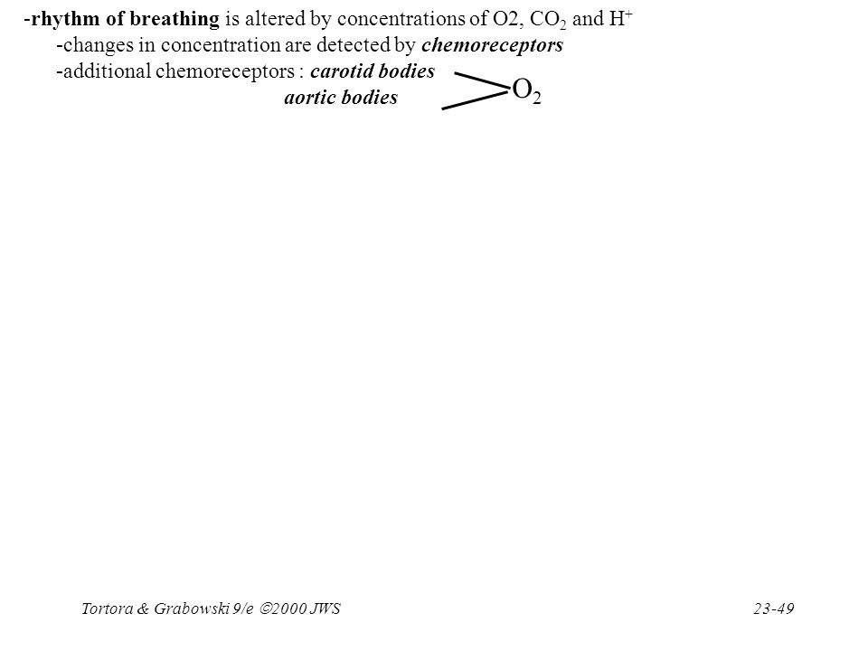 Tortora & Grabowski 9/e  2000 JWS 23-49 -rhythm of breathing is altered by concentrations of O2, CO 2 and H + -changes in concentration are detected